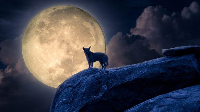 Tại sao chó hú vào ban đêm