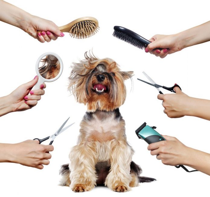 Grooming cho chó tại nhà