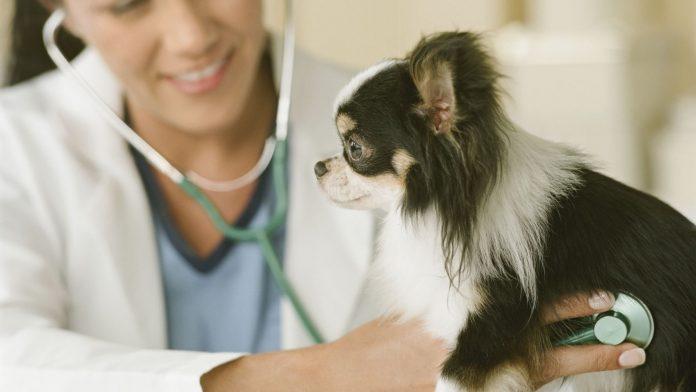 Bệnh tim ở chó
