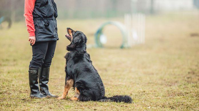 Cách dạy chó nghe lời