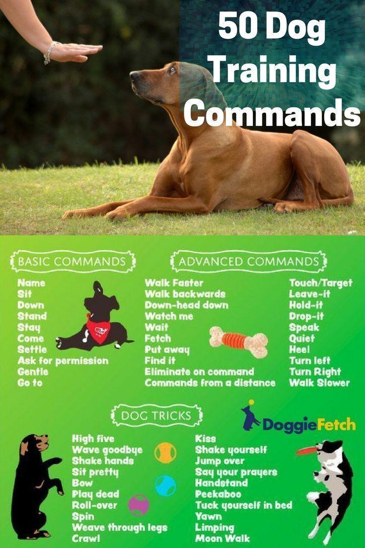 Các lệnh dạy chó vâng lời