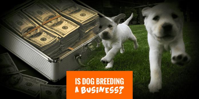 Làm giàu từ chăn nuôi chó