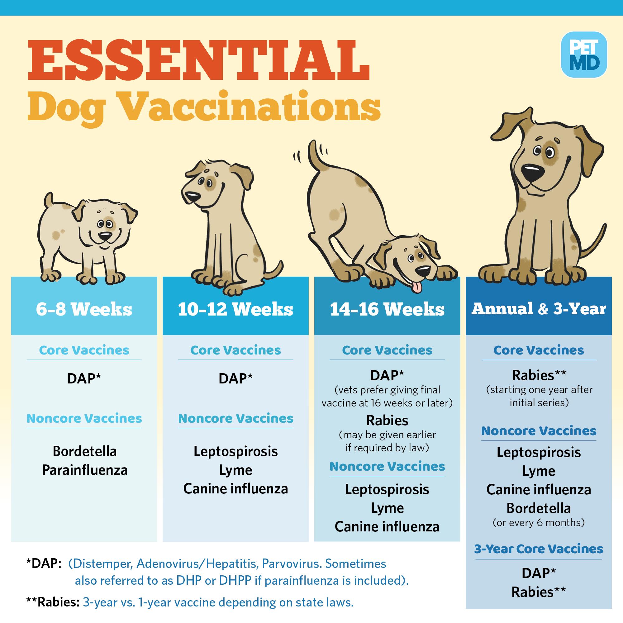 Lịch tiêm phòng 7 bệnh cho chó