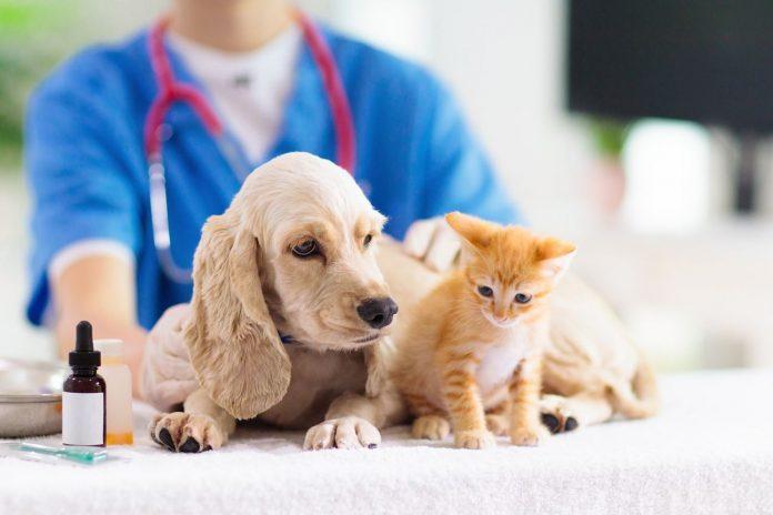 Thuốc tiêm phòng 7 bệnh cho chó